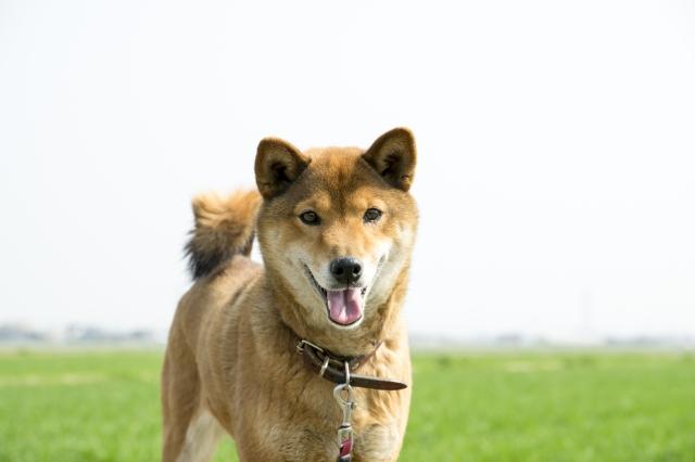 犬は汗をかかないって本当なの?犬の汗について徹底解説!