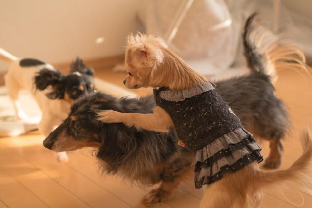 犬の下痢と嘔吐~震えや食欲不振に陥る原因と対処方法は?~