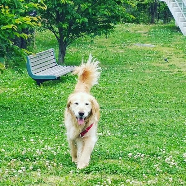 犬の反抗期のしつけ方法!犬が反抗期に見せる行動とは?