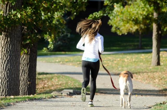 犬の散歩で引っ張られる!引っ張り癖を治すしつけ方法とは?
