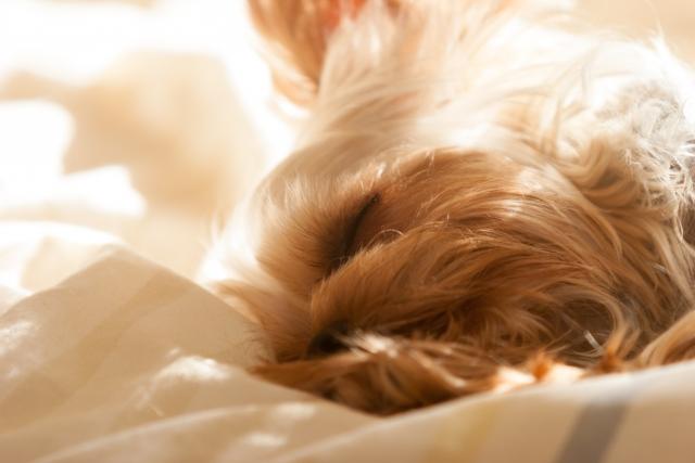 犬の下痢が続く原因をご紹介~元気で食欲もある状態とは?~