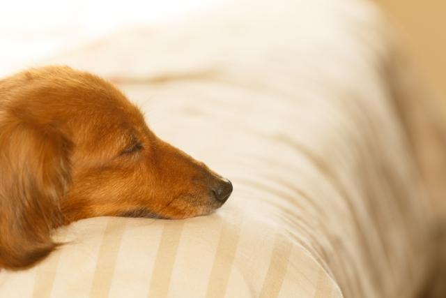 犬が未消化のフードを吐く原因~フードの変更やストレス~
