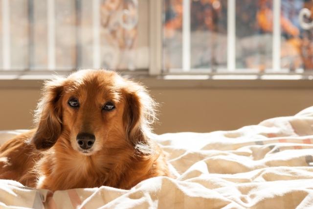 犬の毛並み・毛艶を良くするお手入れ方法についてご紹介!