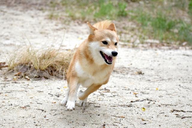 犬の年齢のギネス記録をご紹介!こんなに長生きできるの?