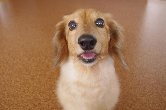犬が飼い主を噛むときの気持ちって?犬が噛む理由とは?