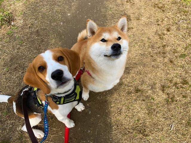 犬は人間のベストパートナ!関係性の歴史を3つご紹介