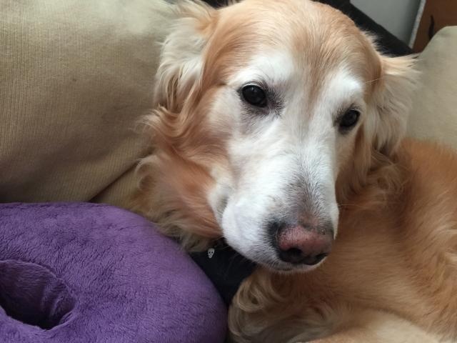 犬が下痢で血便を出す時の原因と対処方法~犬の病気を知る~