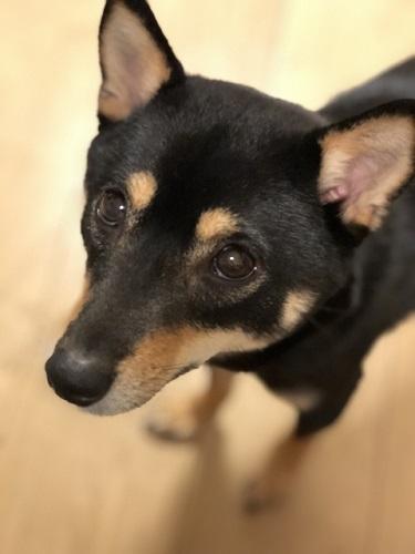 犬が小刻みに震えるのは病気?~考えられる原因と対処方法~
