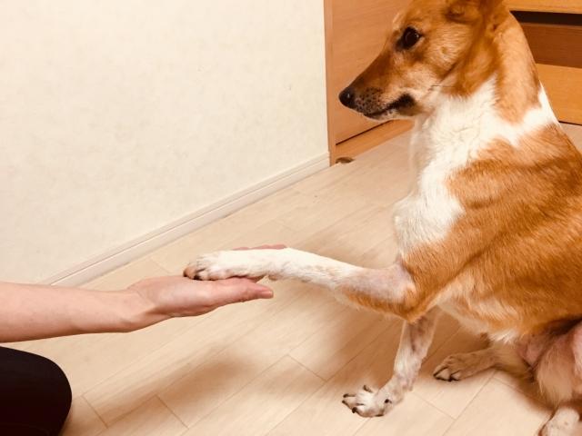 犬が前足を舐めるのはなぜ?~その理由と原因をご紹介~