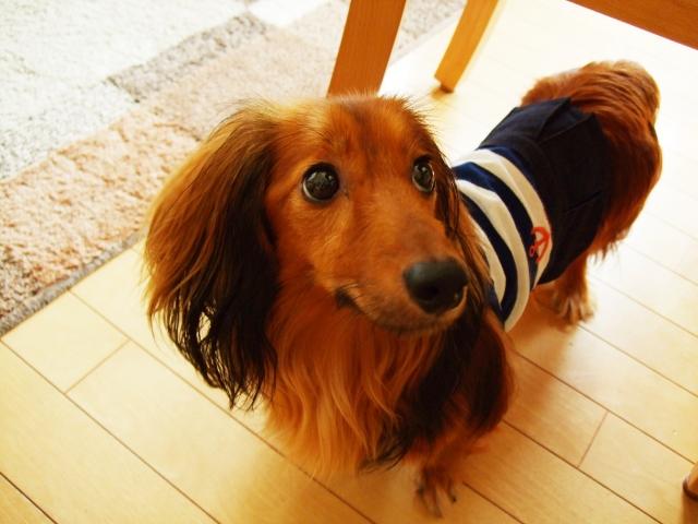 犬がマーキングするのは何の意味があるの?縄張り意識なの?