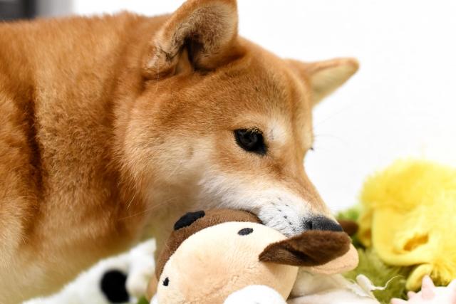 犬が目をそらす理由や意味は?嫌われている可能性はある?
