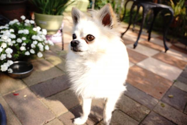 犬が無駄吠えをする原因は何?対策や直し方はあるの?