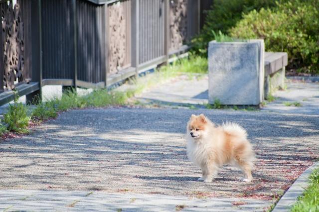 犬が歯をむき出しにする時の気持ちは?威嚇や怒りのサイン?