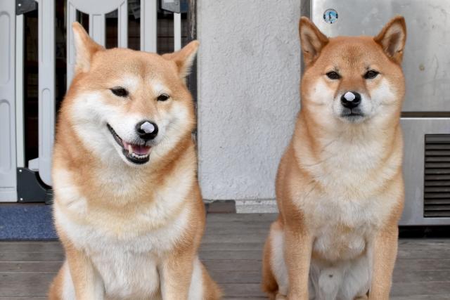 犬同士がお尻のにおいを嗅ぐのはなぜ?その時の気持ちとは?