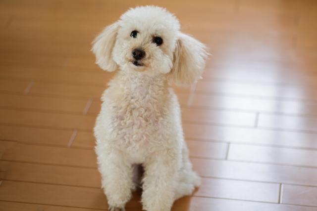 犬におやつは必要なの?正しいおやつの量と与える回数は?