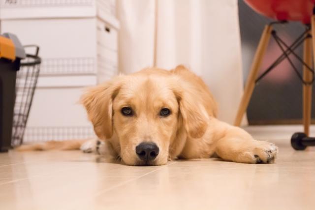 犬がおやつは食べるのに、ご飯は食べない!これってわがまま?