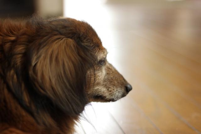 犬にお留守番させる時、電気は付ける?それとも消した方がいい?