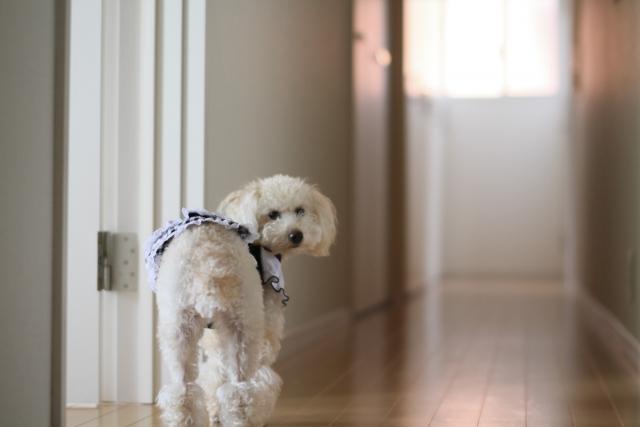 犬のお留守番は何時間まで?長時間お留守番できるの?