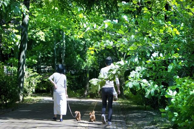 犬の散歩~散歩中の誤飲・誤食を防ぐためには?~
