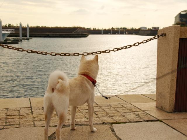 犬が突然散歩を嫌がった時~散歩を嫌がる理由について~