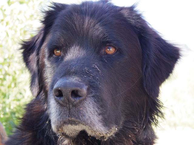 犬の視力はどのくらい?白黒に見えているって本当?暗闇でも見えるの?