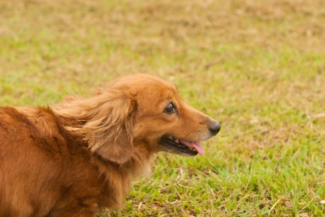 犬の視力が低下したと感じたら!その原因と考えられる病気は?