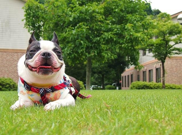 犬のしつけに音を使うと効果テキメン!音を使ったしつけ方法とは?