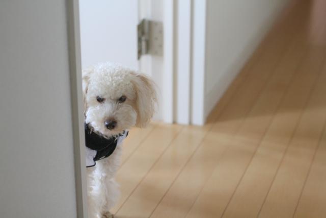 犬のストレスの原因と症状別ストレス解消法とは?