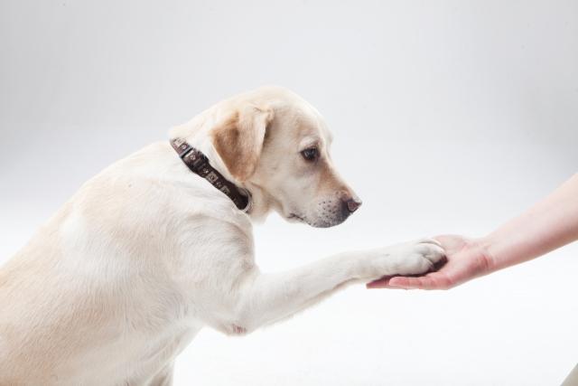 犬を飼い主に服従させる!主従関係をしつけるテクニックとは?
