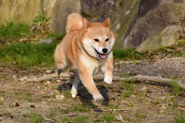 犬のテンションが高い!騒ぐ犬を落ち着かせる方法とは?