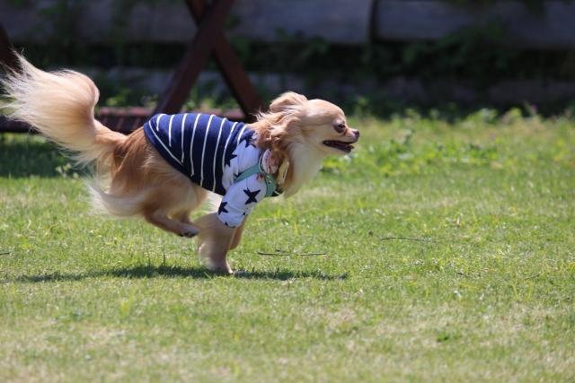 犬が遠吠えしない理由とは~遠吠えしない犬も存在する?~