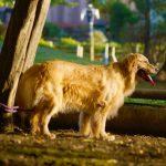 犬の犬種を10にグループ分け(JKC)【8G】7グループ以外の鳥獣犬の基本情報!