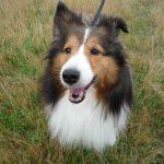 犬がクーンと、か細く鳴く時はどんな気持ちなの?寂しいの?甘えているの?