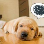 犬の無駄吠えを止めさせる方法!効果的なしつけ方法とは?