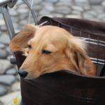 犬を叱った時の態度は?これって反省しているの?