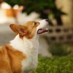 犬の食事のしつけ 食事の順番やあげ方はどうすればいいの?