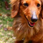 犬の記憶力ってどのくらい?飼い主と離れ離れになっても覚えている?