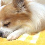 犬が寝ながら吠えるのはなぜ?寝言?いびき?