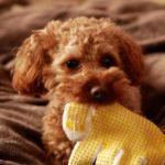 犬がお留守番で感じるストレスを軽減するには?飼い主ができることは?