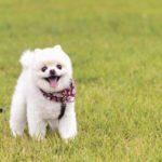 犬が飼い主の顔を舐める理由は愛情表現なの?