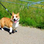 犬の散歩のしつけ方法~散歩中に多いトラブルとは?~