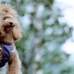 犬の嘔吐の見分け方について~嘔吐の色や状態で知る体調~