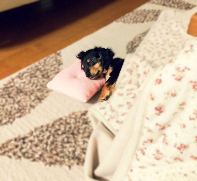 犬が飼い主に寄り添って寝る理由は?その時の犬の気持ちとは?